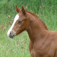 Things for Quarter Horse mare owners to know