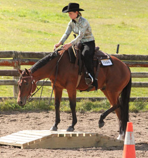 Join the AQHA-NZ