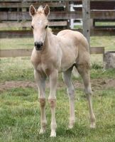 Filly - Smartie Pants (pending)