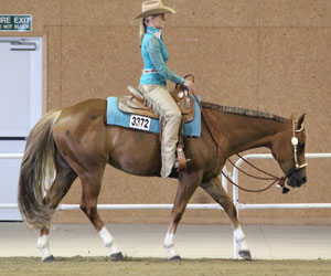 AQHA-NZ shows